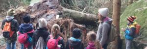Sturmschäden im Göschenerwald